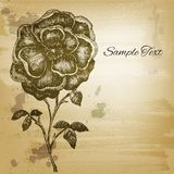 Vintage etching flower card. Vector background for Royalty Free Stock Photos