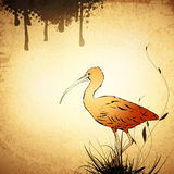 Vintage Eudocimus ruber or Red Ibis Royalty Free Stock Photos