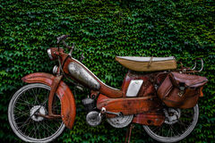 Vintage European Moped. Vintage 60s French Moped Or Scooter With Pannier Bag And Flat Tyre Or Scooter Against An Ivy Background Royalty Free Stock Photo