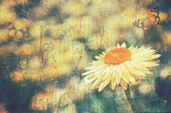 Vintage everlasting daisy and butterflies Stock Image
