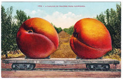 Vintage exaggeration postcard artwork giant peaches 1900s 1910s Stock Photos
