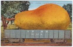 Vintage exaggeration postcard artwork giant pear 1900s 1910s Stock Images