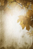 Vintage fall Stock Photography