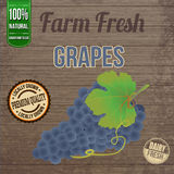 Vintage farm fresh grapes poster Royalty Free Stock Images