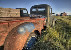 Vintage Farm Trucks. Saskatchewan Canada weathered and old Royalty Free Stock Photo