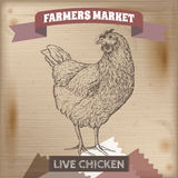 Vintage farmers market label with live chicken. Stock Photos