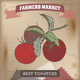 Vintage farmers market label with tomato branch color sketch. Stock Images
