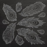 Vintage Feather vector set. Royalty Free Stock Images