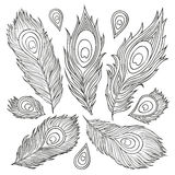 Vintage Feather vector set. Hand-drawn illustration. Stock Image