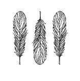 Vintage Feather vector set - Illustration. Sketch. Sketch picture.Figure drawn in pen Stock Photography