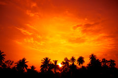 Vintage filter : silhouette landscape of coconut tree ,tropical Stock Images