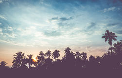 Vintage filter : silhouette landscape of coconut tree ,tropical Stock Photography