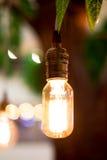 Vintage filter : Vintage lightbulb hanging on tree. Stock Photography