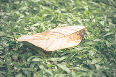 Vintage filter : yellow dry leaf on green grass after rain Royalty Free Stock Photos