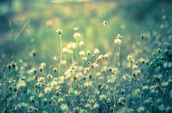 Vintage filtered of flowering grass. Stock Photos