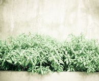 Vintage filtered : Green leaf bush and small white flower at con Stock Photos