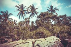 Vintage filtered palm trees on coastline. Beautiful landscape in tropical climate. Wooden grove at sunny weather Royalty Free Stock Photo