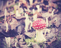 Vintage filtered picture of toadstool in forest Stock Images