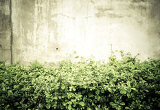 Vintage filtrado: Arbusto verde da folha e flor branca pequena no engodo Fotografia de Stock Royalty Free