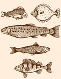 Vintage fish Stock Images