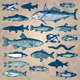 Vintage fish set (vector). Set of antique fish engravings; scalable and editable vector illustrations Stock Photos