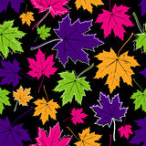 Vintage floral autumn (fall) seamless pattern with multicolored maple leaves Stock Images
