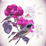 Vintage floral background with birds Royalty Free Stock Photography