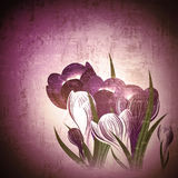 Vintage floral background with crocus Stock Photos