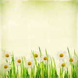 Vintage floral background with daisies in green grass on a backg Stock Photos