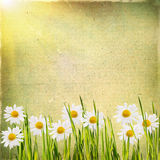 Vintage floral background with daisies in green grass on a backg Royalty Free Stock Image