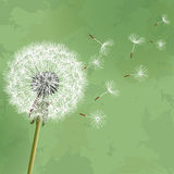 Vintage floral background with flower dandelion Royalty Free Stock Image