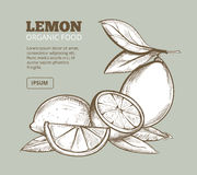 Vintage floral background with hand drawn lemons Royalty Free Stock Photos