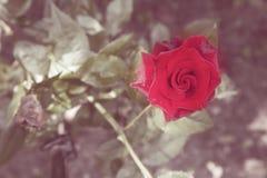 Vintage floral background Stock Photos
