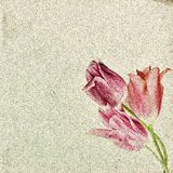 Vintage floral background with tulips on the background of old g Stock Images