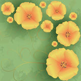 Vintage Floral Background With Flowers Poppies Stock Photography