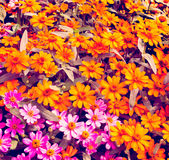 Vintage floral background. Stock Photography