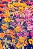 Vintage floral background. Stock Photos