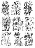 Vintage floral Botanical Flower Drawings Stock Photos