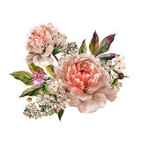 Vintage floral bouquet of peonies. Vintage floral bouquet of light rose peonies and white lilac. Hand drawn watercolor botanical illustration  on white Royalty Free Stock Photos