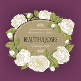 Vintage floral card with a frame of white roses on purple background. Stock Photo