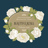 Vintage floral card with a frame of white roses. Royalty Free Stock Photos