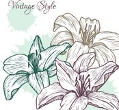 Vintage floral card with lilies Royalty Free Stock Photos