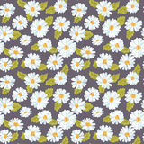 Vintage Floral Daisy Background Stock Photography