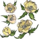 Vintage floral design elements Stock Image