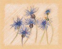 Vintage floral do esboço do ofício das centáureas azuis retro Fotografia de Stock Royalty Free