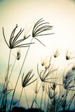 Vintage floral grass Stock Photography