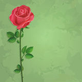 Vintage floral green background with flower rose Stock Image