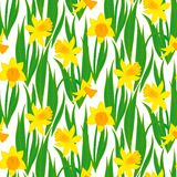 Vintage floral pattern with daffodils. Stock Image