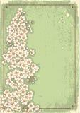 Vintage floral postacard Royalty Free Stock Photos