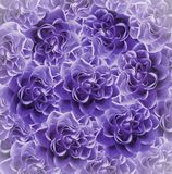 Vintage floral  purple beautiful background.  Flower composition. Bouquet of flowers from  violet roses. Close-up. Nature Royalty Free Stock Photos